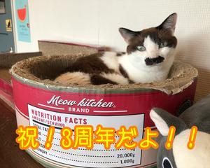 祝!猫まる茶屋3周年だよっ!!!
