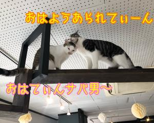 茶屋にモテ女現る!?だよっ!!