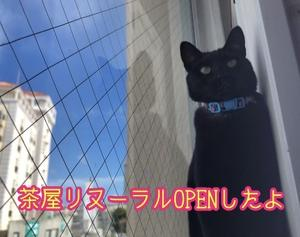 猫まる茶屋リニューアルOPEN!だよっ!!