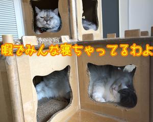 猫の遊び相手募集!だよっ!!