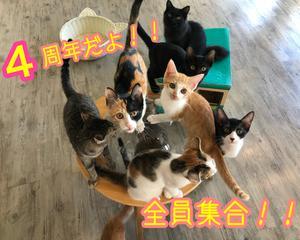 \猫まる茶屋!4周年だよっ!/