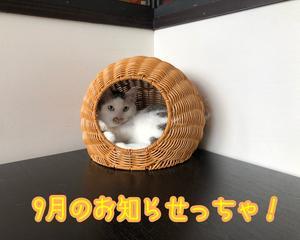 9月のお知らせ、だよっ!!
