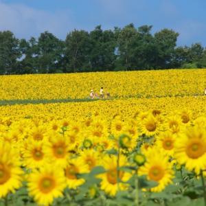 夏の北海道旅行:宗谷・留萌・上川のおすすめルート(3/4日目)