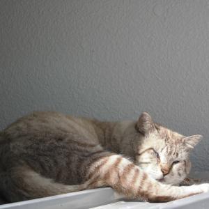 猫に小判。にならぬよう
