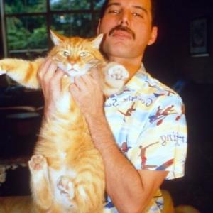 『ボヘミアン・ラプソディ』は猫映画でもある…と言いたいくらいに猫も可愛い