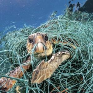 魚を食べると海の環境問題が起きる