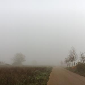 霧深い景色と冬の植物たち