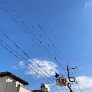 【電線の鳥よけ対策】設置完了したものの新たな問題が…