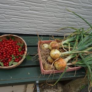 収穫祭とたこ焼きランチ