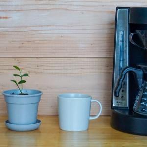 朝のコーヒールーティンとレモンの木