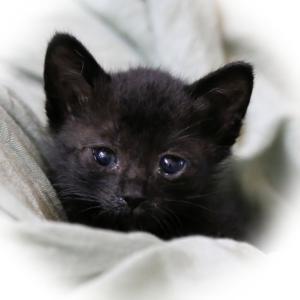 【幸福】「黒猫は日本では厄除け」幸せを呼ぶ福猫の特徴