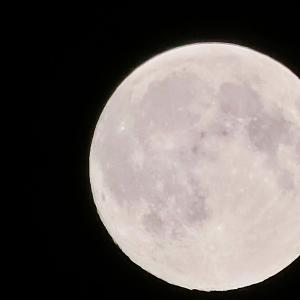 【遠く離れていても繋がってるよ、、】 ~ピンクムーンの夜に、、  (#遠い海の向こうへ届く思い #フィリピンセブ #世界は繋がってる #ピンクムーンは月がピンク色に? #ピンクムーンはいつ? #4月の満月の夜はピンクムーン)