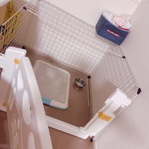 Q助トイレ問題