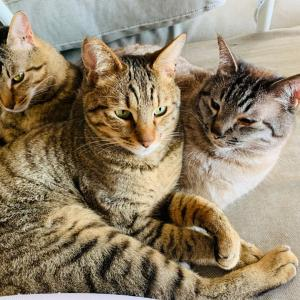 在宅ワーカーは今日も猫と闘う