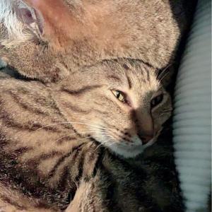 猫の変顔がたまらない