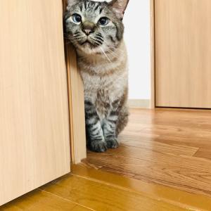 ニトリのNクールでとろける猫