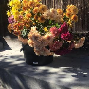 色とりどりの花に囲まれたい訳ではないのだけど・・・