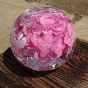 インスタで話題のコスモス寺の紫陽花を見てきた