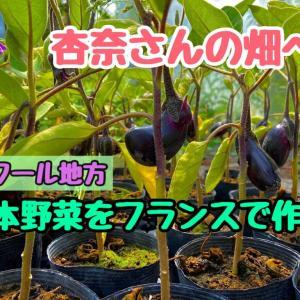 フランスのロワール地方で美味しい日本野菜を作る農家、杏奈さんの畑へ!
