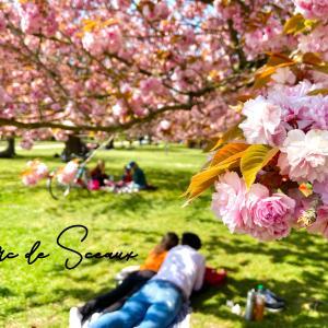 【2021年】パリ郊外ソー公園の桜。 おすすめルート紹介!フランスのお花見ならここ! パリ周辺で1番桜を楽しめる公園。Parc de Sceaux