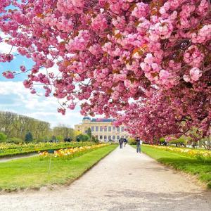 【2021年春】パリ植物園の桜。 Jardin des Plantes de Paris