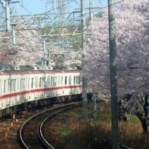 【神戸電鉄】2021年03月 5000系5020 桜満開の長田カーブにて
