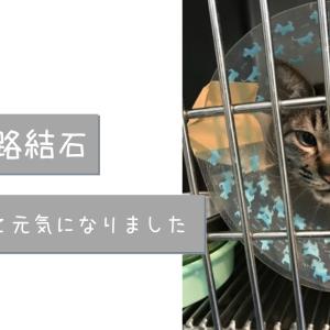 猫の尿路結石で手術した猫|体験談とその後の経過