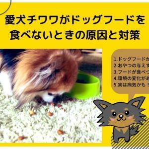 愛犬チワワがドッグフードを食べないときの原因と対策