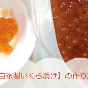 【自家製いくら漬け】おいしく漬けるコツ、いくら丼ぶりにすると激ウマ!冷凍保存も。