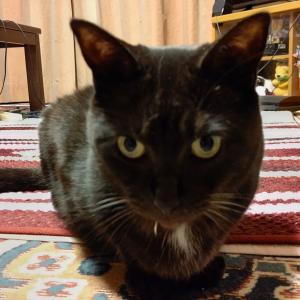 """家族になって約10年経ちました! 黒猫ミックス""""イブ""""です。"""