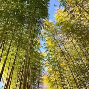 1泊2日のマタニティ旅 修禅寺温泉