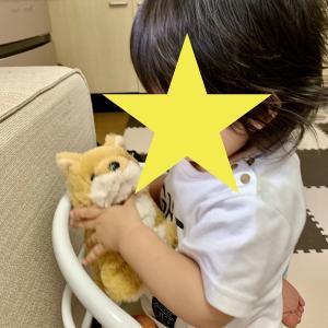 【小児科医に驚かれた】成長の早い1歳の娘がハマっているオモチャと絵本