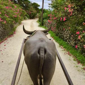 【星の砂が見つかる島】石垣島から竹富島へのツアーをお得に予約する方法は