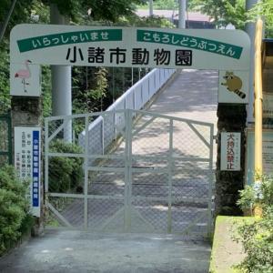【昭和レトロ】ノスタルジーな雰囲気が逆に新しい小諸市動物園と小諸市児童遊園地