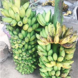 スリランカはフルーツで溢れている!