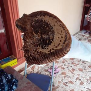 これがスリランカの蜂蜜だ!