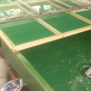 朝の池掃除