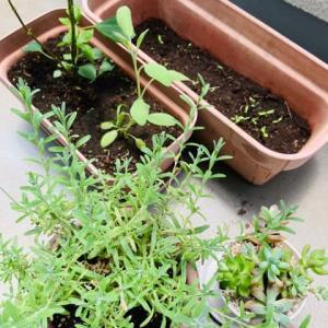 意外や植物にハマってしまいました・・。