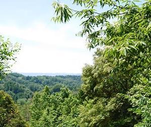 【岐阜県美濃加茂市】みのかも健康の森でハイキング(ヒィヒィ)してきた -中編-