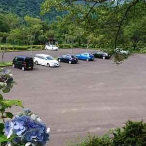 [岐阜県関市]21世紀の森公園、株杉の森で感動してきた