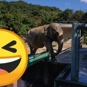 愛知県岡崎市 東公園動物園と味噌ラーメンとカクキュー八丁味噌で大満足した話
