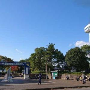木曽三川公園センターのコスモス見て。四日市コンビナートの夜景を見て感動するw