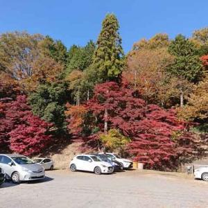 日本紅葉名所100選、池に映る逆さモミジで有名な曽木公園に行ってきた