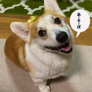 満足して☆ウトウト(^。^)