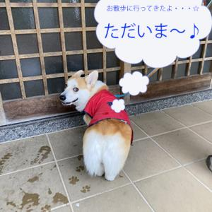 雨の日の散歩☆