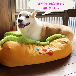 どんなのおもちゃがいいのかな〜ヽ(´∀`)ノ