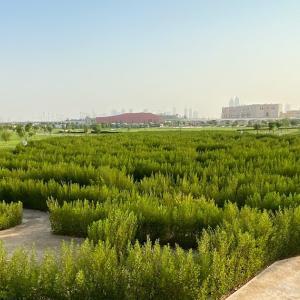 カタール国の形の迷路がある「5/6 park」を早朝散歩