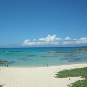 沖縄・奄美が世界自然遺産登録されました!