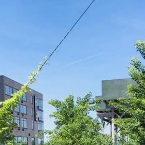 ニューヨークの今 空中庭園「ハイライン」が再オープンへ