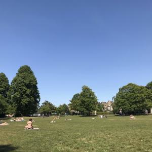 【晴天、公園、悠々自適】年甲斐もなく夏に心を躍らせる